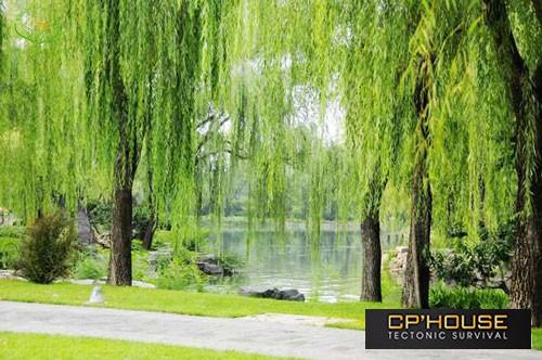Những lưu ý cần thiết cho người mới bắt đầu trồng cây cảnh phong thủy sân vườn